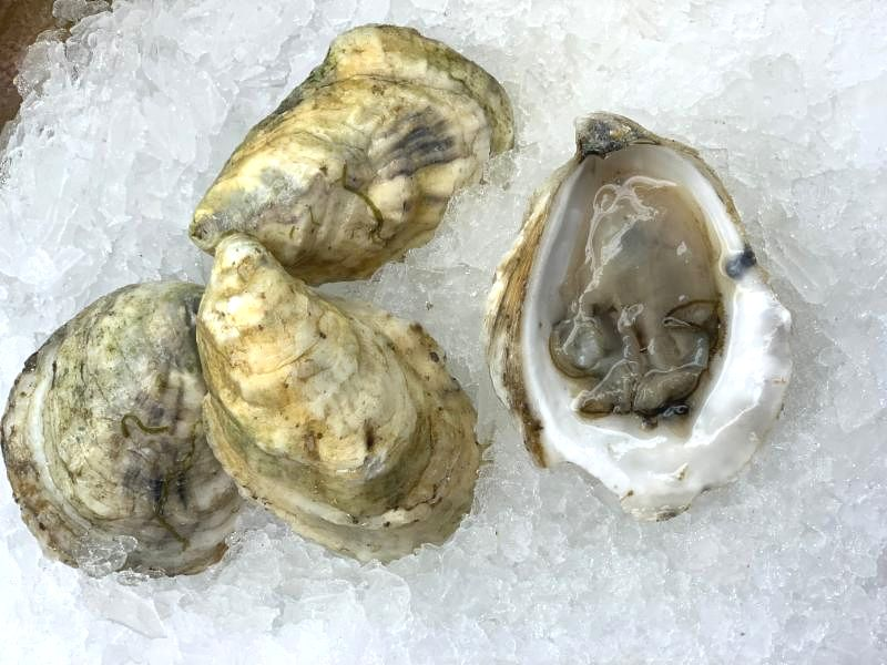 Oysters_ Great White _33_.JPG
