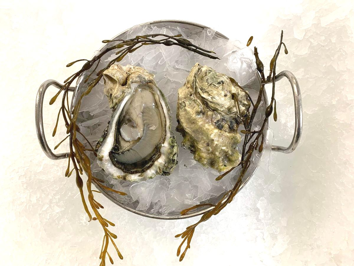 Oysters_ Miyagi _13_.JPG