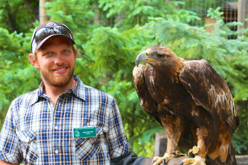 Raptor Fair Eagle