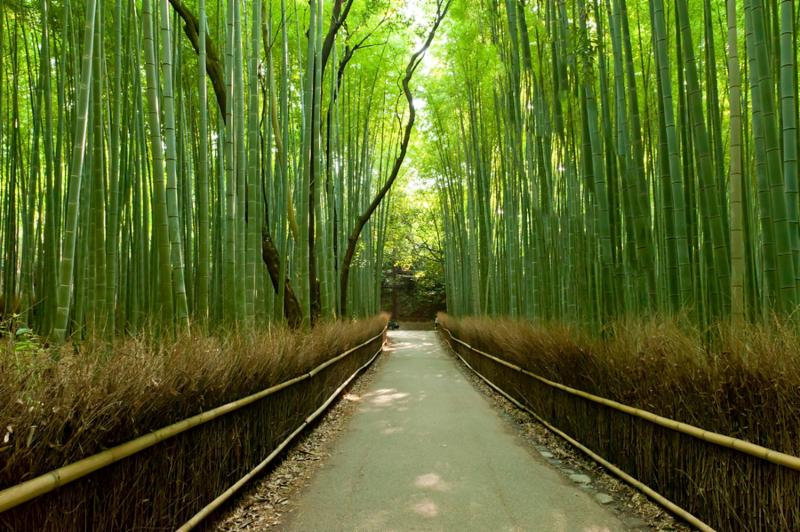 bamboo_grove_green.jpg