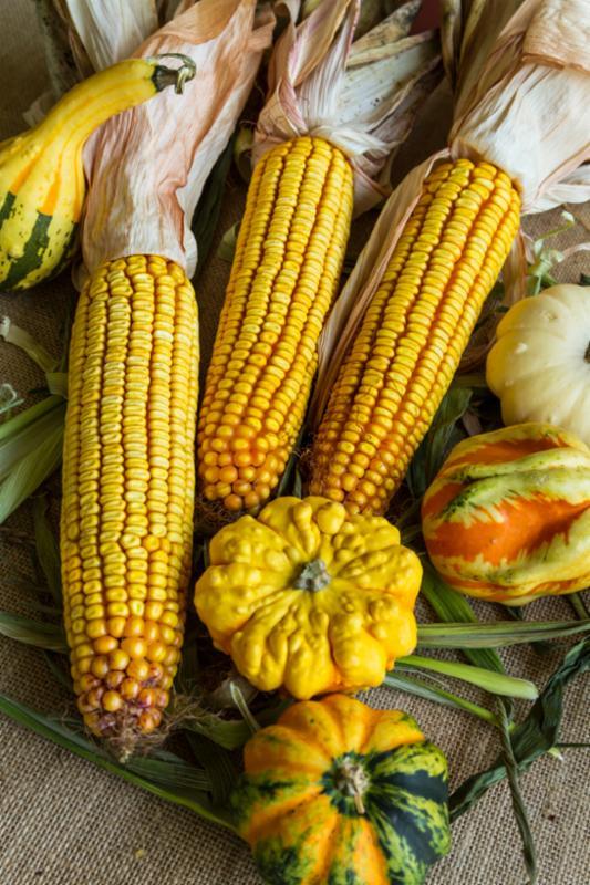 autumn_corn_gourds.jpg