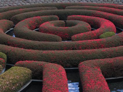 flowering maze