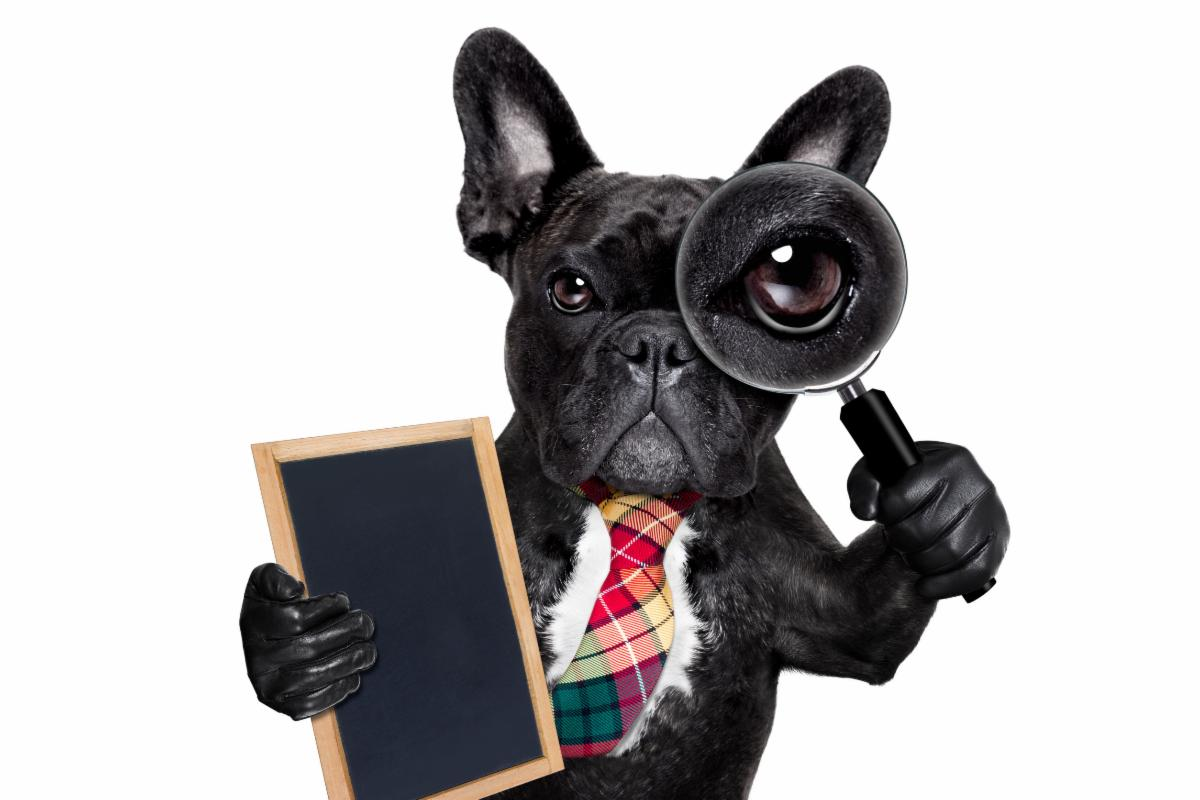dog holding a magnifying glass and tablet