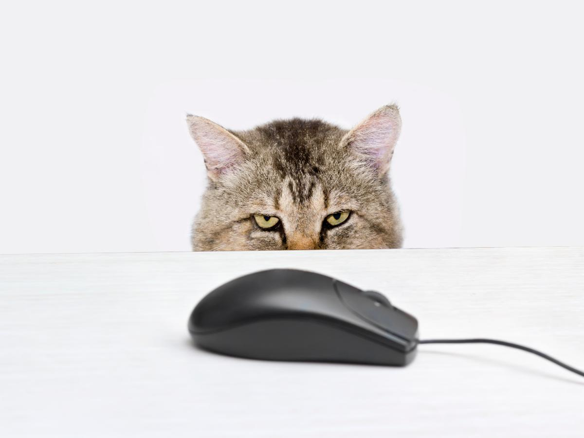 cat looking at computer mouse