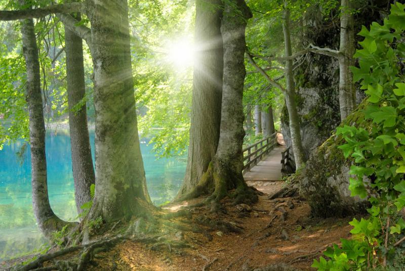 forest_landscape_tree.jpg