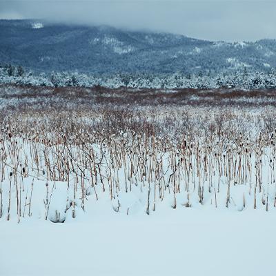 snowy marsh 2021