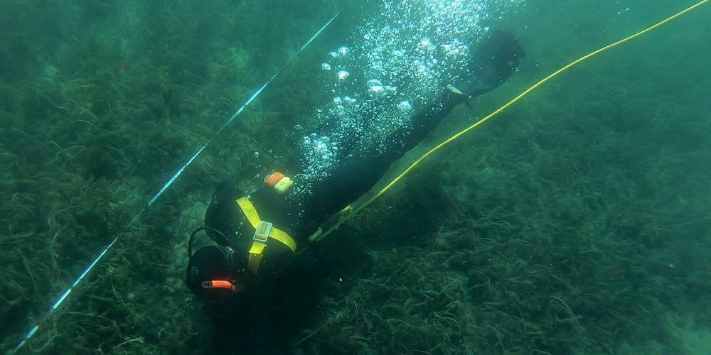 Diver removing aquatic invasive weeds from Lake Tahoe