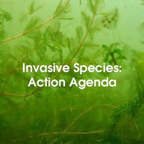Invasive Species Action Agenda