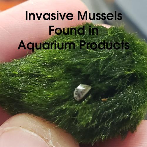Invasive Mussels Found in Aquarium Products