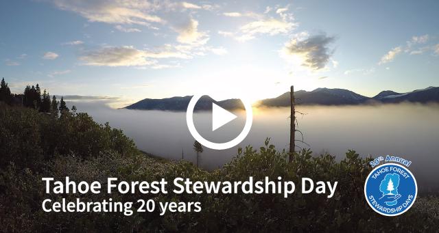 Tahoe Forest Stewardship Day