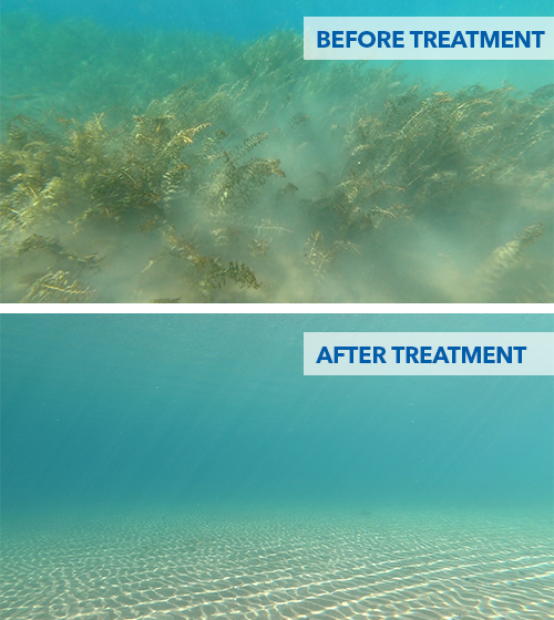 before and after aquatic weed removal