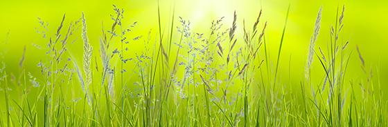 Spring grasses in sunlight