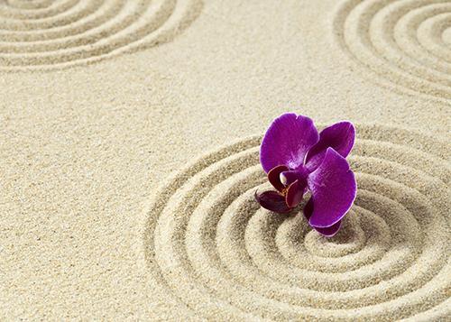 Flower blossom on zen circles in sand