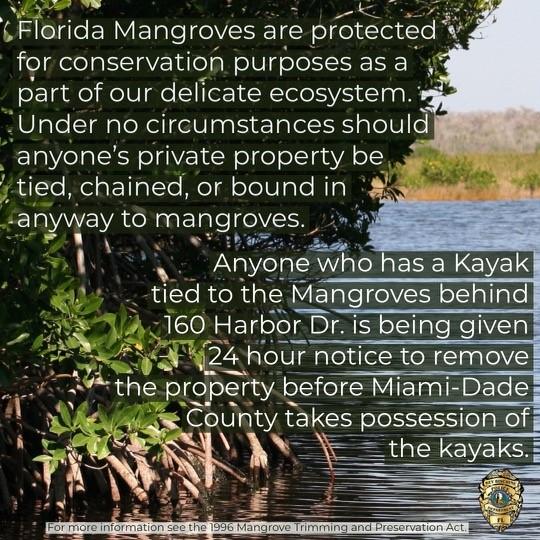Kayaks Mangroves.jpg