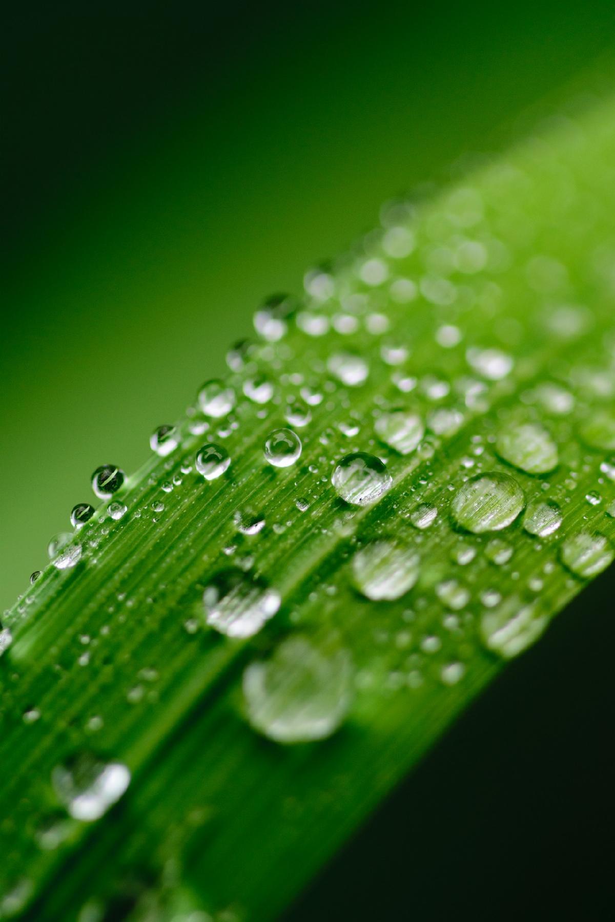 green-2432374_1920.jpg