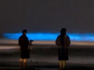 a couple stands on the beach at night watching the blue glow from a rising wave.