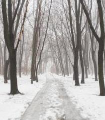Snowy path thru bare trees