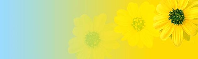 yellow-flower-fade-header.jpg