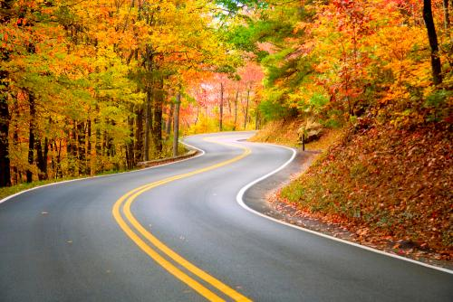highway bordered by fall trees