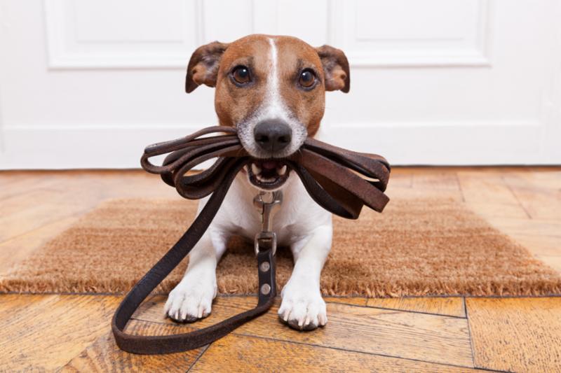 dog_leather_leash.jpg