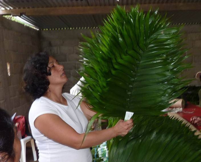 Eco-Palms