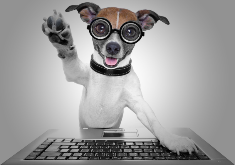 Small dog with glasses at a computer