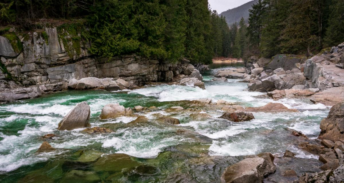 Blue green river flowing over rocks. Looking downstream. Rocks and evergreen trees on the sides of the river and in background.