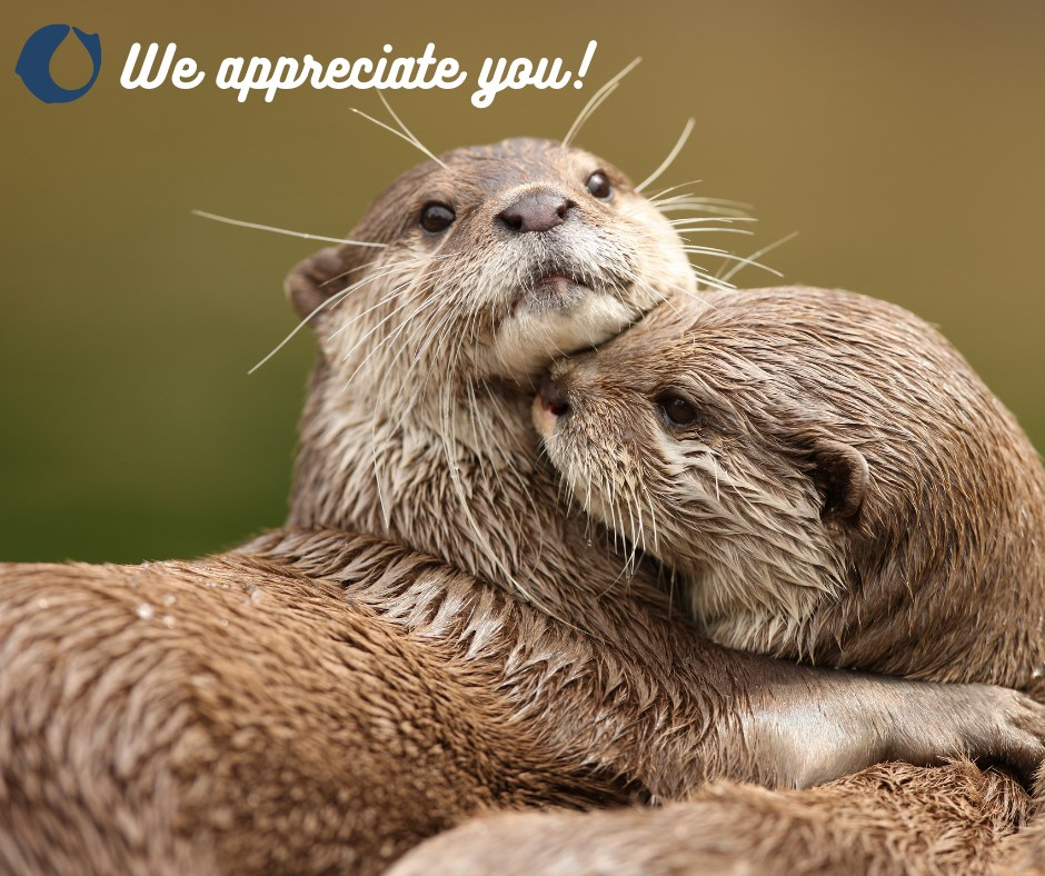 "A photo of two otters hugging. CELO logo in the corner with the words ""We appreciate you!"""