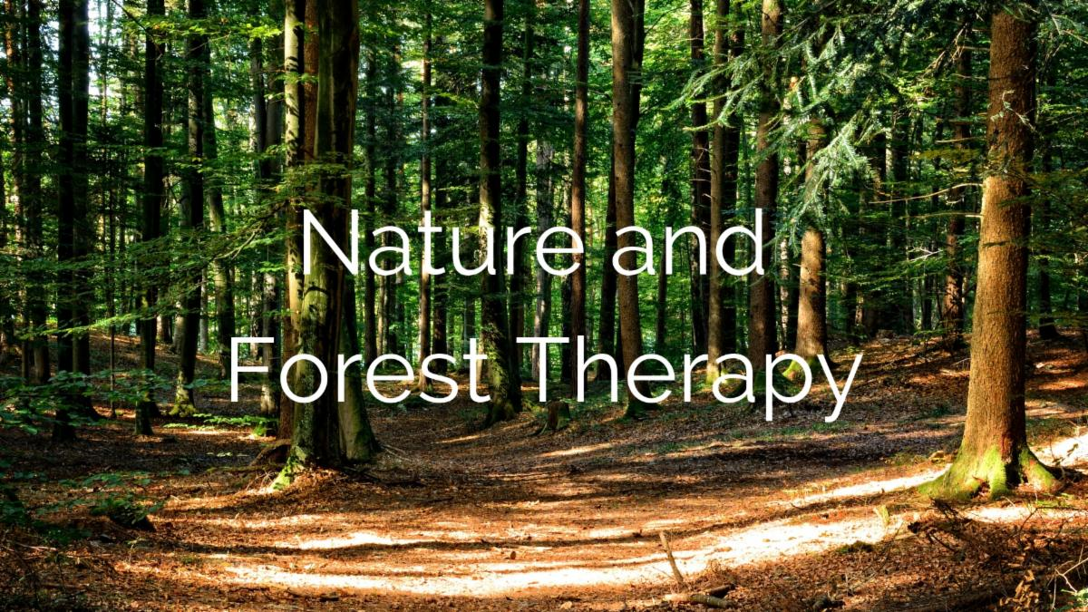 Nature-and-Forest-Therapy-1.jpg