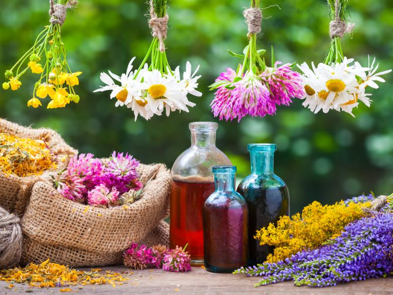 Healing herbs bunches bottle of oil or tincture hessian bags with dried marigold and clover. Herbal medicine.