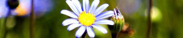 white-flower-banner2.jpg