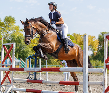 Equestrian competition