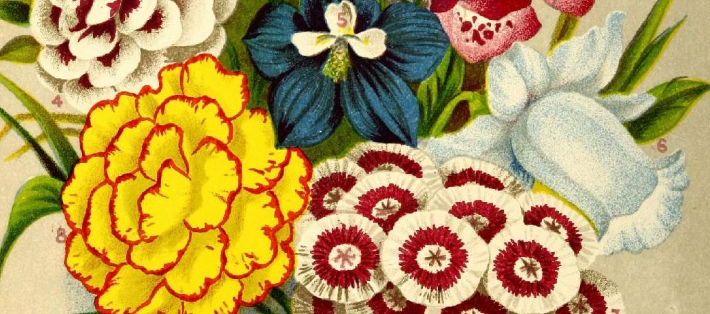"""Perennial flowers from """"Vick's Flower and Vegetable Garden"""" (1878)."""