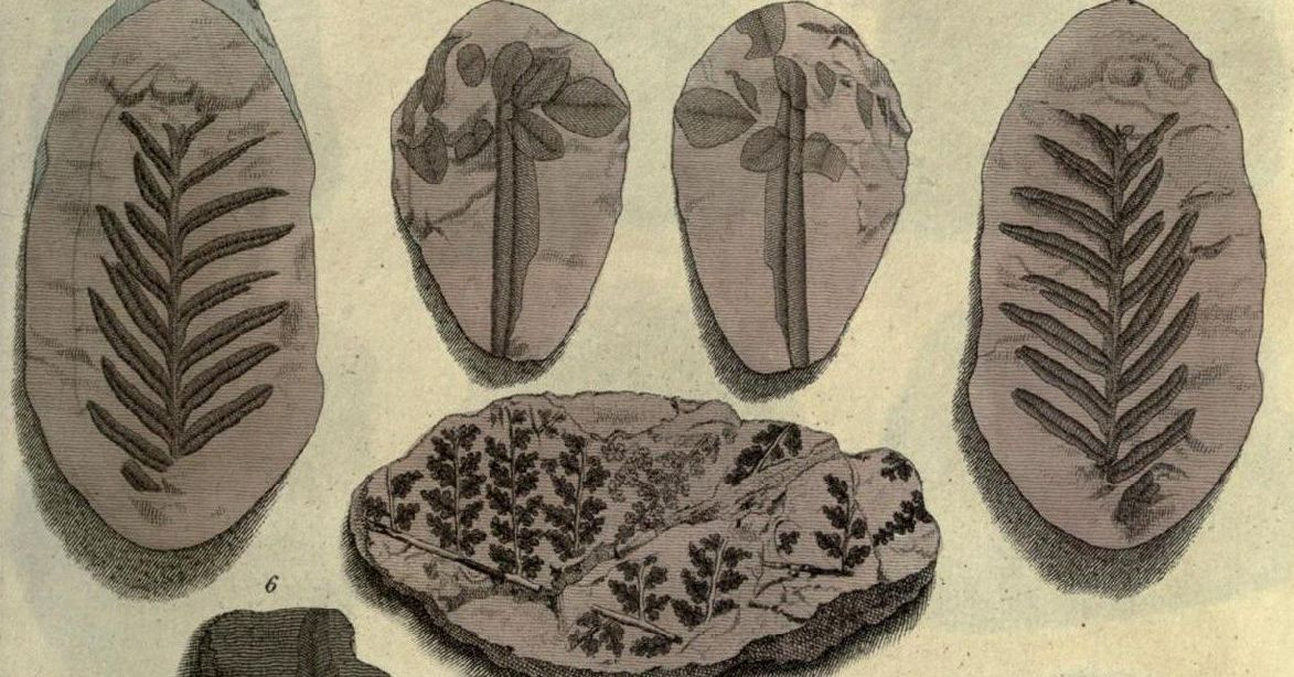Illustration of fossil plants from James Parkinson's Organic Remains of a Former World (1811)