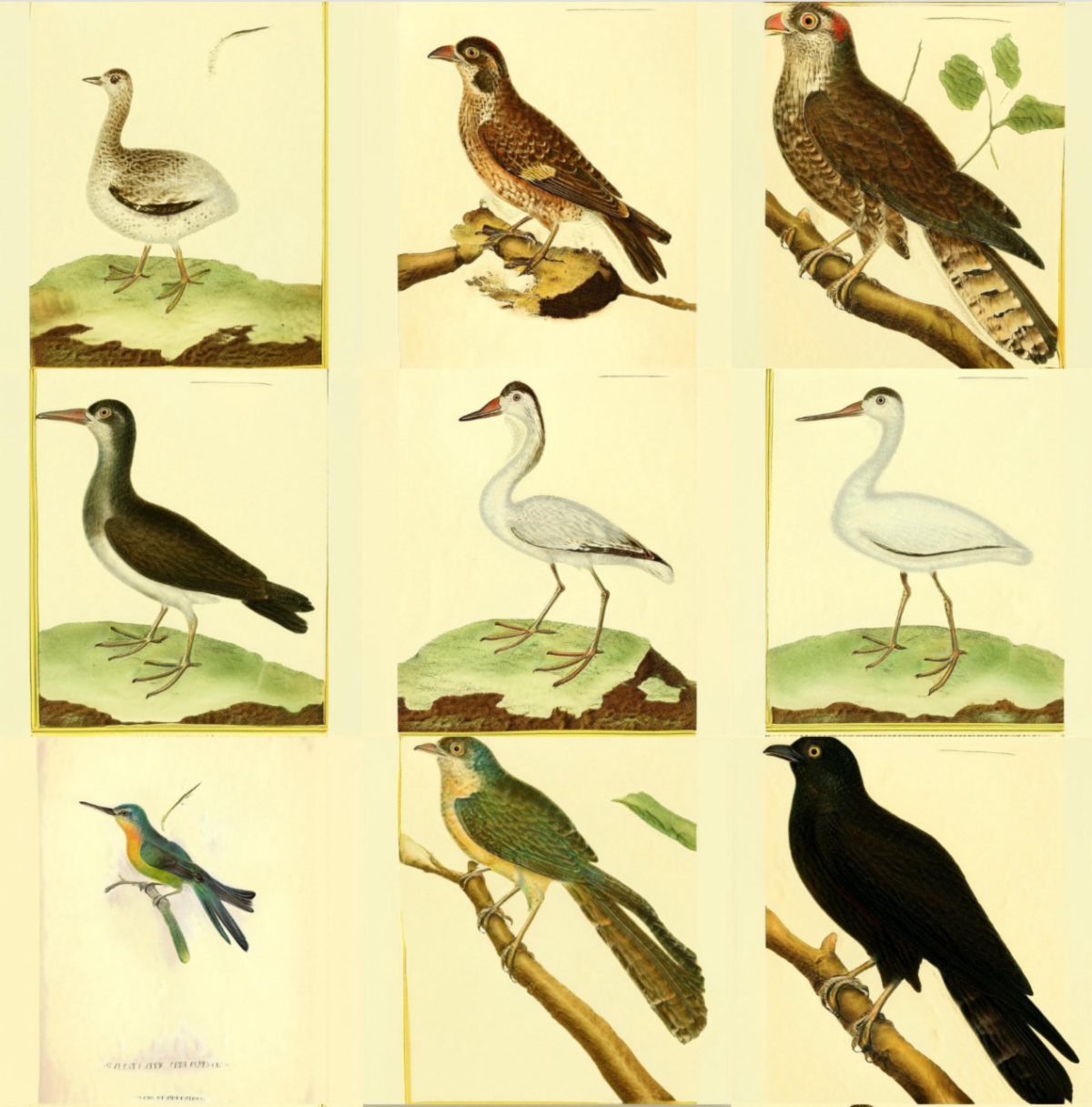 A set of nine images on a grid. Each looks like a scientific illustration of a different bird.