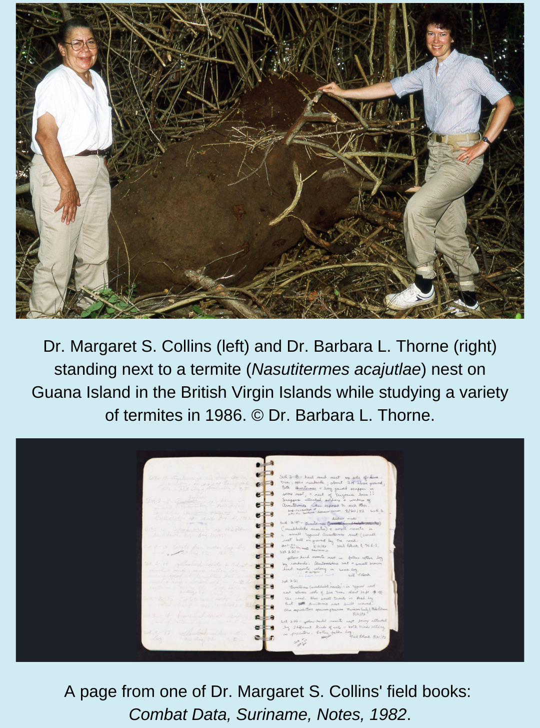 Top: Two scientists researching termites in the British Virgin Islands stand together with a huge termite nest in between them. Photo taken in 1986. Bottom: An open spiral notebook with handwritten text in blue ink.