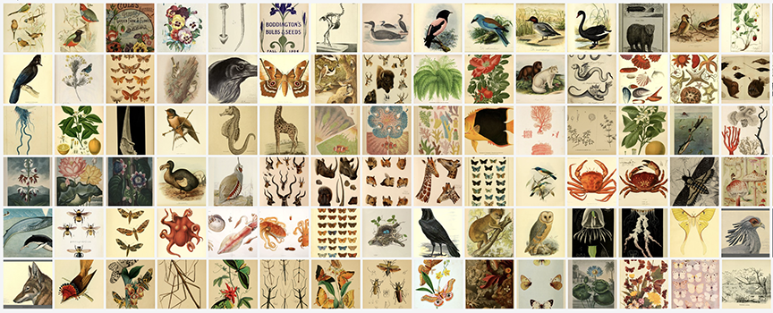 Collage of illustrations of flora and fauna.