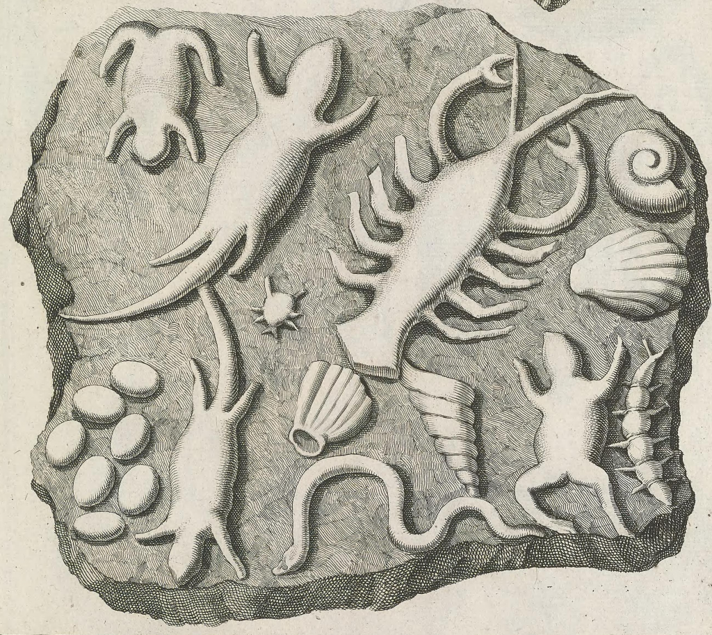 Illustration of fake fossils from Lithographia (1740)