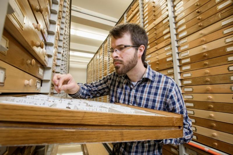Man examining beetles in a collection drawer.