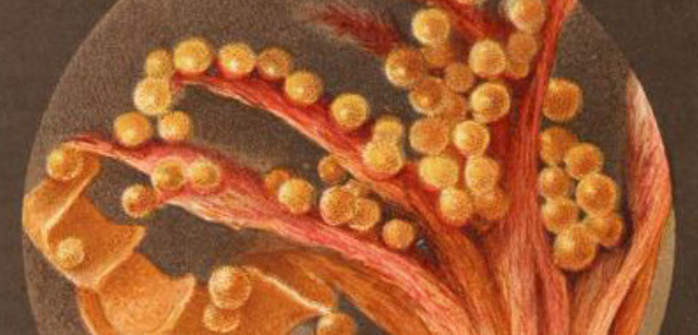 Illustration of microscopy from Worlds of Wonder.