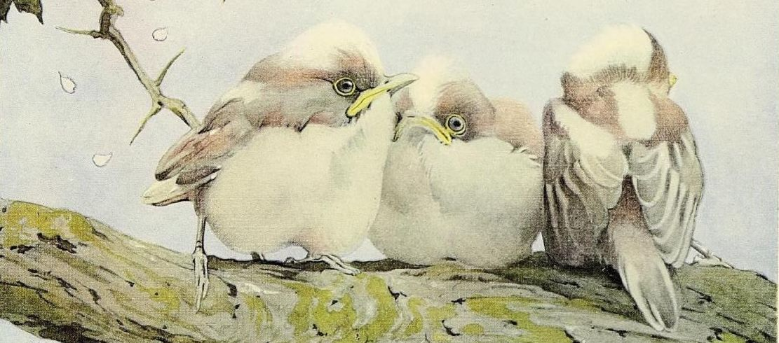 """Illustration of baby birds on a branch from """"The Book of Baby Birds"""" (c1912)."""