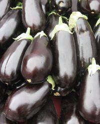 closeup of deep roots eggplants