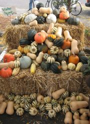 big sweet leaf squash display
