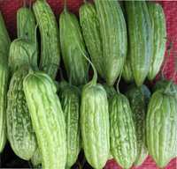 bitter melon